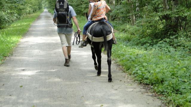 Découvrir la nature au rythme de l'âne