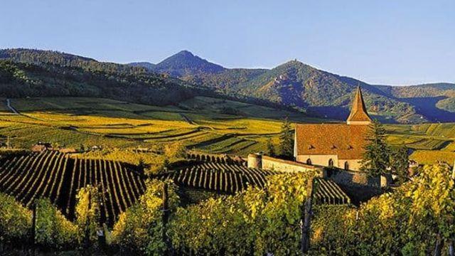 Découverte du vignoble Alsacien
