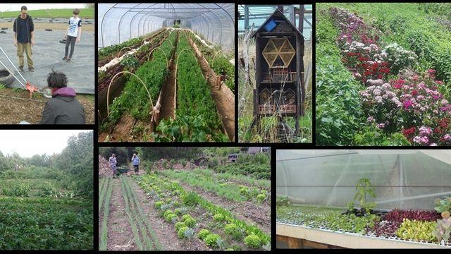 Cours de permaculture 35h