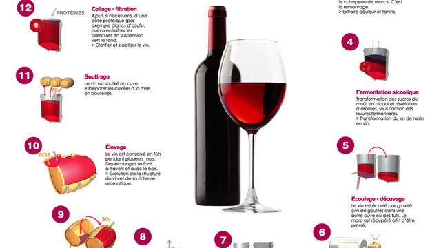 La Vinification des vins rouges
