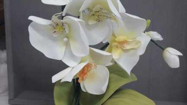 Créations d orchidées