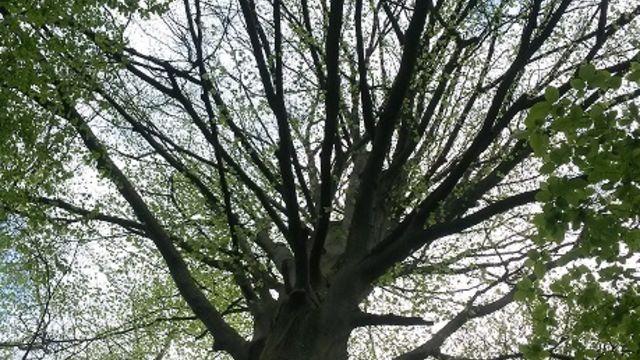 """Balade méditative ou """"Bain de forêt"""""""