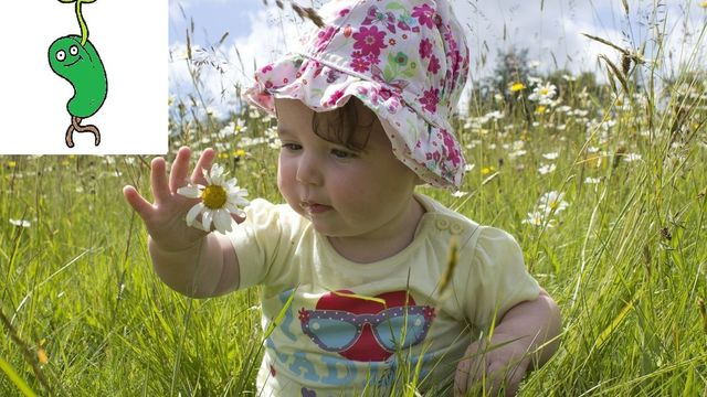 Graine de bébé nature