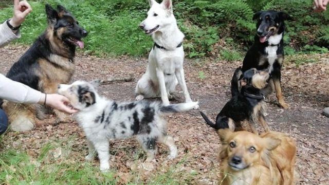 Cours d'éducation aux ordres de base avec Pawsitive Dog