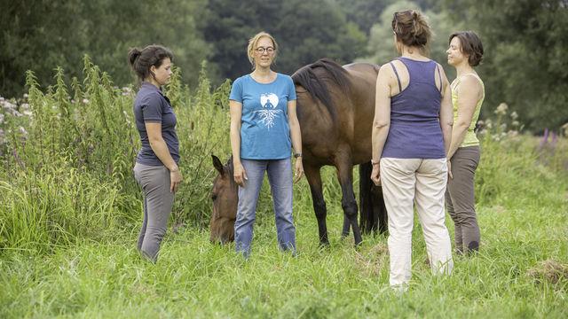 Pleine conscience et chevaux
