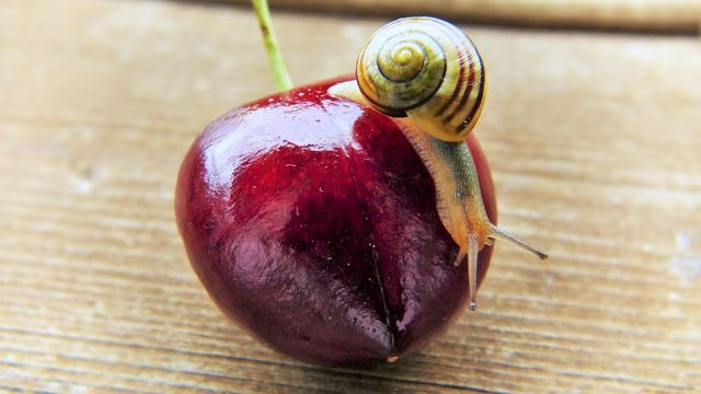 Pilier de la santé : l'alimentation vivante