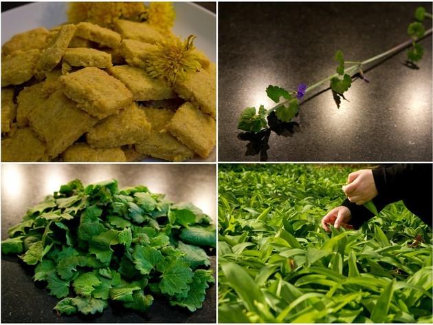 Cuisiner avec les plantes sauvages
