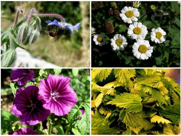 10 plantes médicinales à avoir chez soi