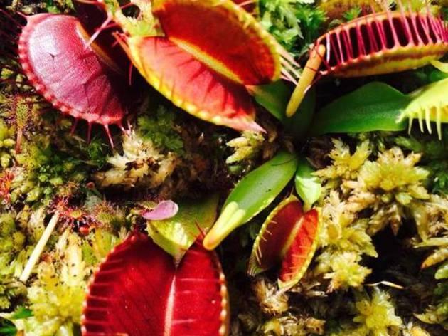 initiation la culture des plantes carnivores atelier nature et animaux par anthony vancoppenolle. Black Bedroom Furniture Sets. Home Design Ideas