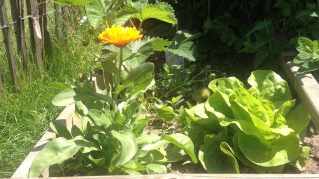 """Ateliers pratiques de jardinage """"nature"""""""