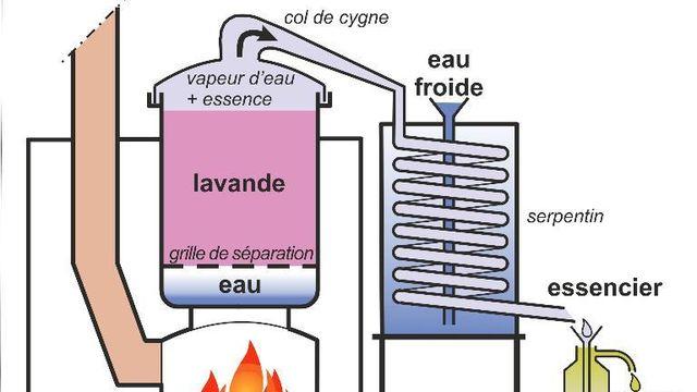 Je fabrique mes Hydrolats aromatiques