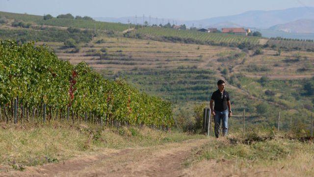 Découverte du vignobles de l'est Europe.