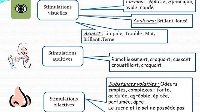 L' Analyse organoleptique et sensorielle