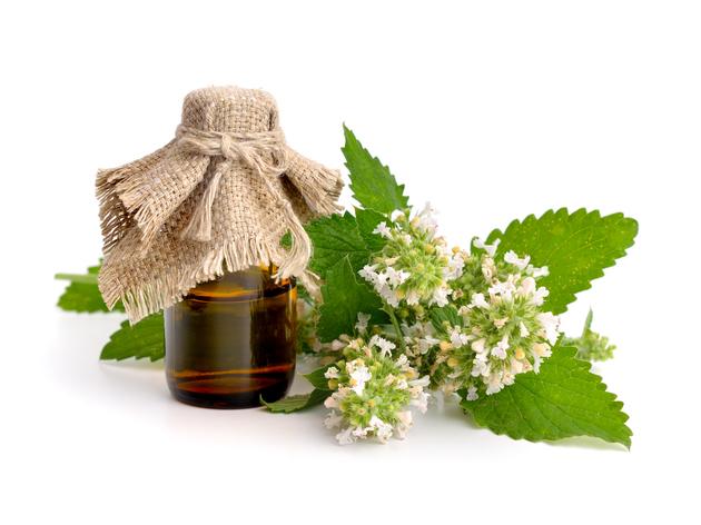 Quelles huiles essentielles pour les enfants ?